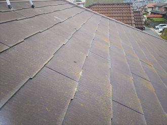船橋市西習志野で行った化粧スレート屋根調査で塗装の防水性の低下により苔が発生