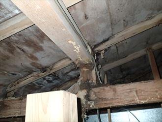 木更津市 天井のシロアリ