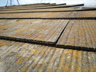 松戸市樋野口で行った屋根調査で化粧スレートに反りを発見