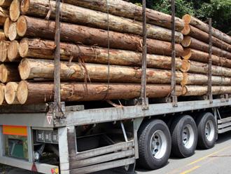 スギの材木運搬中