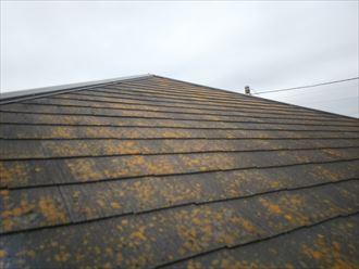 柏市明原で行った化粧スレート屋根の調査で防水性の低下により屋根全体に苔・藻・カビが発生しています