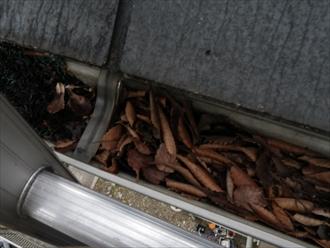 雨樋に落ち葉がたっぷり