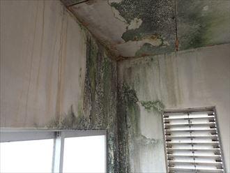 鴨川市の商業ビルの漏水調査、塔屋と屋上を確認しました