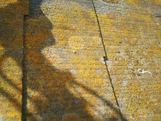 松戸市樋野口で行った化粧スレート屋根調査で防水性の低下により苔・藻・カビが発生
