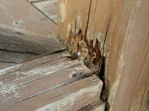 木材の腐食