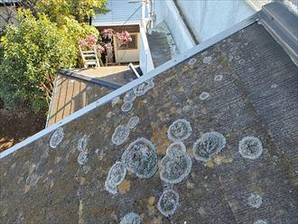 スレート屋根にカビが発生する原因は防水性の低下