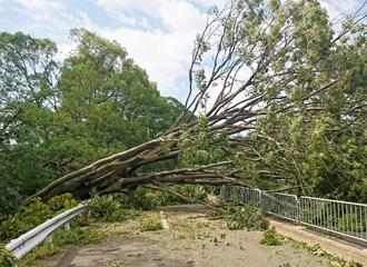 暴風雨による倒木