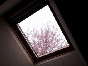 天窓から花を見る