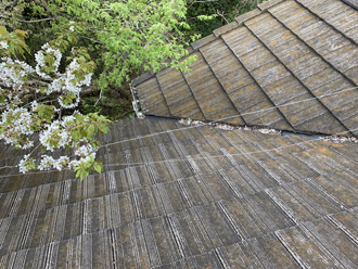 屋根のそばに生えた木々