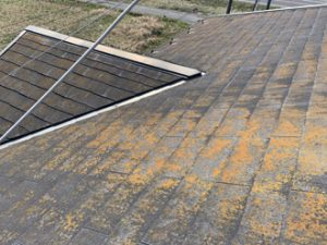 屋根の全体状況
