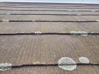防水性が低下し苔・藻・カビが発生