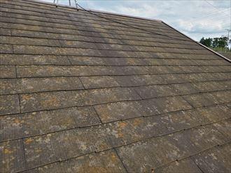 防水性が低下して苔・藻・カビが発生しているスレート屋根の調査の様子