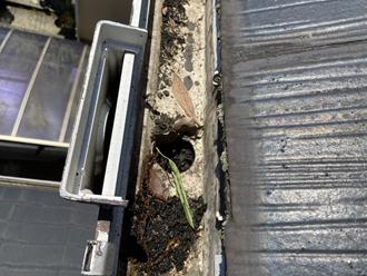 雨樋の調査を実施、落ち葉の詰まり
