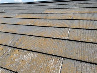 塗膜が剥がれて苔・藻・カビが発生しているスレート屋根の調査