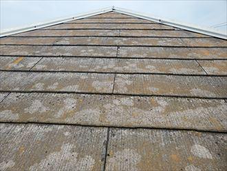 塗膜が劣化し苔・藻・カビが発生しているスレート屋根の調査