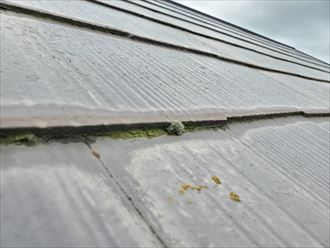 防水性が低下し苔が発生