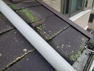 防水性の低下により苔が発生