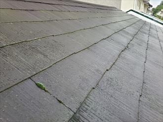 スレート屋根の塗膜が剥がれて苔が発生