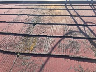 屋根に生えたコケ