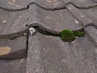 セメント瓦の屋根には苔が発生していました
