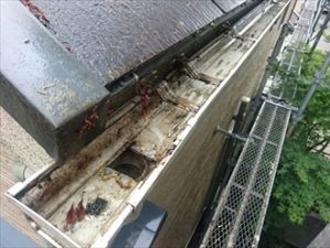 清掃した雨樋