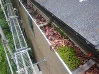 雑草や枯葉が詰まった雨樋