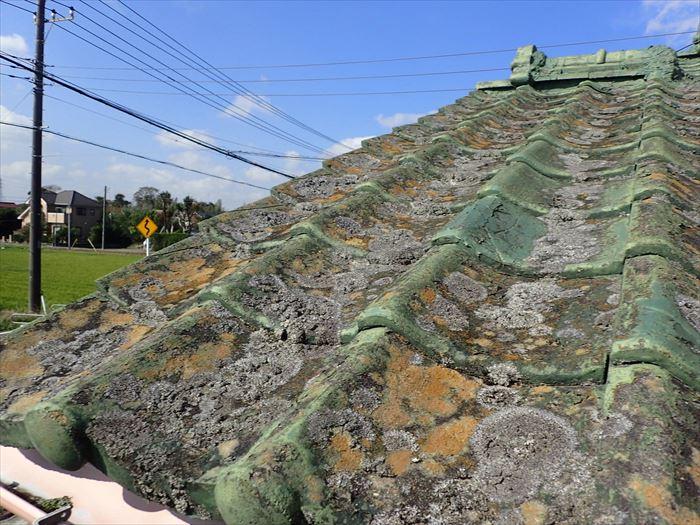 セメント瓦の苔