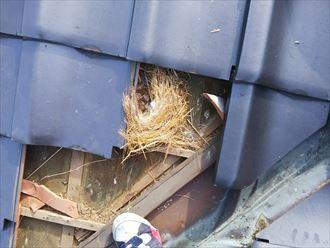 鳥の巣発見