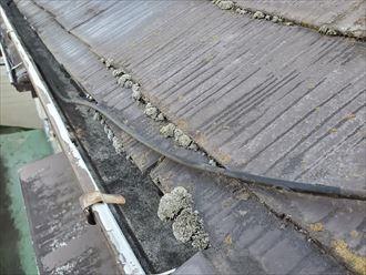 苔が発生している屋根の軒先
