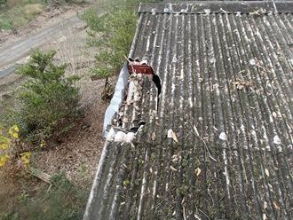 木が落下し破損