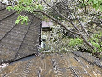 屋根のそばに生える木々