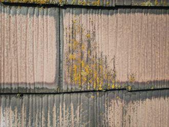 防水性の低下により苔・藻・カビが発生