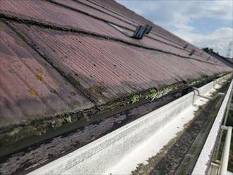 防水性の低下により軒先に苔が発生