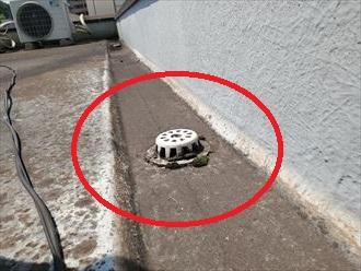 ドレン廻りに苔が発生すると排水不良の原因になり雨漏りに繋がります
