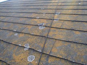 塗膜が劣化し苔とカビが目立つスレート屋根