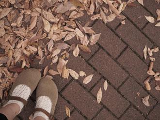 強風後の落葉