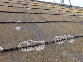 市川市大洲で行った化粧スレート屋根調査で屋根材と屋根材の隙間を埋めている苔は雨漏りに繋がります