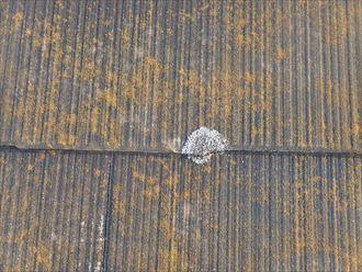 千葉市若葉区富田町で行った化粧スレート屋根調査で耐久性の低下に繋がる苔の発生