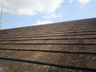 流山市美田で行った化粧スレート屋根の調査で防水性が低下し苔・藻・カビが発生しています