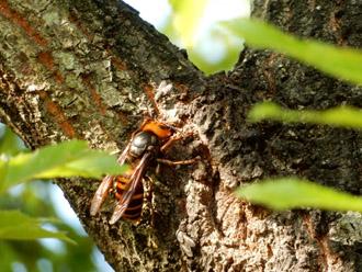 森の中のスズメバチ