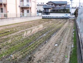住宅地の水田
