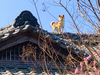 屋根の上の犬