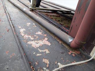 市原市 瓦棒やね塗装調査003_R