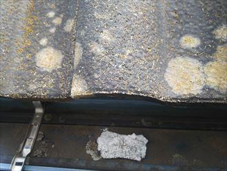 野田市山崎で行った瓦屋根の調査で棟の漆喰が剥がれて軒樋に落ちた漆喰は雨樋の詰まりに繋がります
