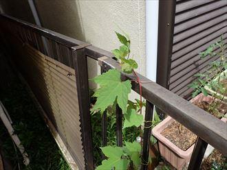 千葉市 台風で外壁落下006_R