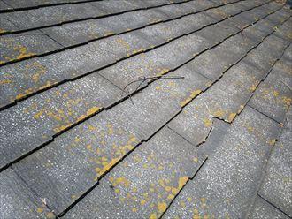 千葉市緑区土気町で行った屋根調査でコロニアルネオが原因で屋根全体にひび割れなどの不具合