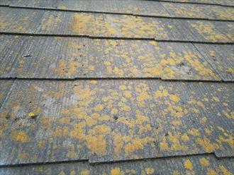 柏市永楽台で行った化粧スレート屋根調査で屋根に苔・藻・カビが発生