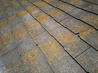 松戸市平賀で行った化粧スレート屋根調査で屋根材の欠けを発見