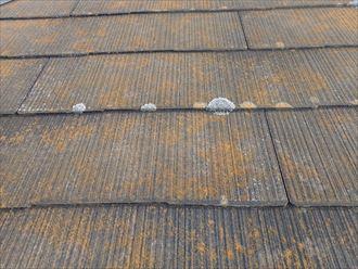 千葉市若葉区富田町で行った化粧スレート屋根調査で塗膜が剥がれて雨水を吸収しやすいスレートに苔が発生