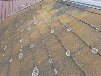 市川市大洲で行った化粧スレート屋根調査で築19年の屋根に苔・藻・カビが発生